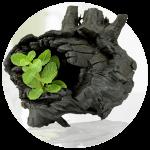 Carbón activo con menta