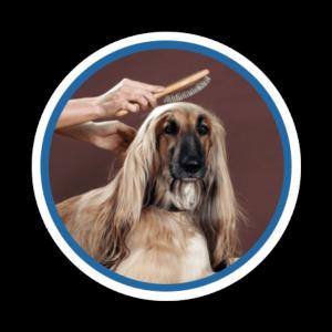 perro con pelaje saludable