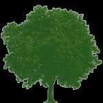 Arbol Verde