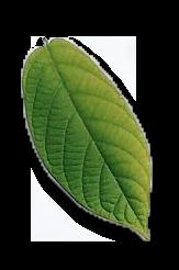 Hojita 1